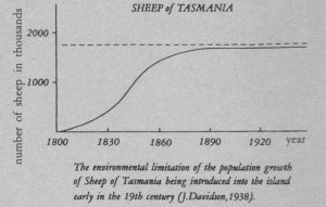 sheep_tasmania_img
